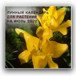 Photo of Місячний календар для рослин по днях липня 2020