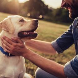 Photo of Рік собаки не дорівнює 7-ми років у людини: вчені вивели нову формулу визначення віку собак