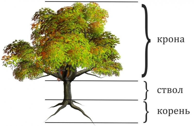 Photo of Як отримують харчування дерева, що ростуть на піску?