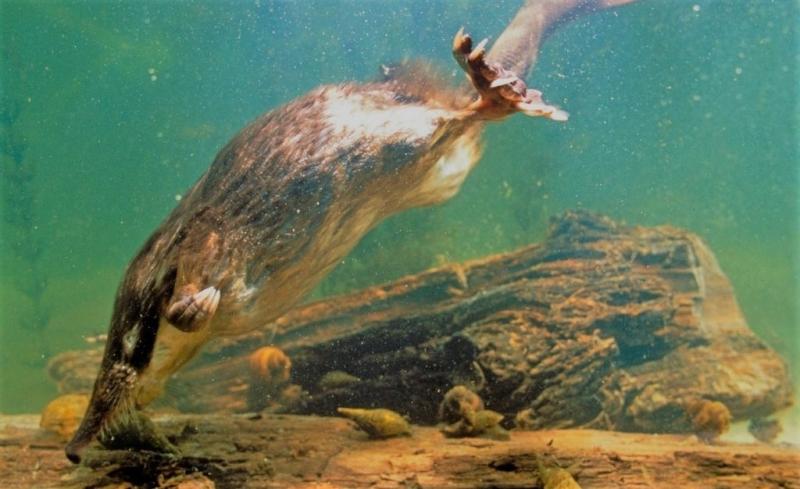 Photo of Відчуваються запахи під водою?