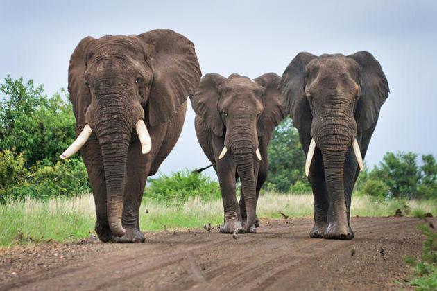 Photo of Найсильніші тварини в світі: список, назва, опис, фото і відео