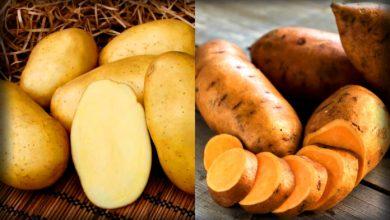 Photo of Чим відрізняється батат від картоплі?