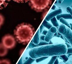 Photo of У чому відмінність між вірусом і бактерією: пояснюємо простими словами