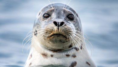Photo of Навіщо тваринам вуса?